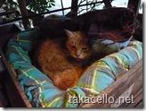 寒いし眠いって感じの番猫