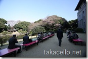 東京国立博物館の桜