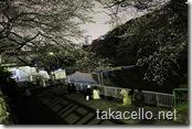 北の丸公園のお堀で夜桜見物をする恋人達