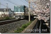 桜と阪和線