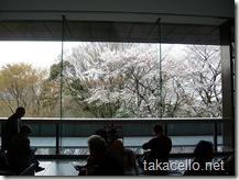 東京国立博物館の桜を館内から眺める