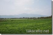 宮崎・鹿児島県境の田園地帯