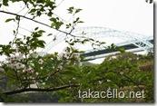 ソメイヨシノと西海橋