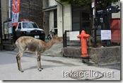 交番の前にたたずむ鹿