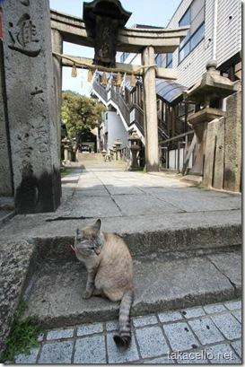 艮(うしとら)神社の鳥居でくつろぐ猫ちゃん