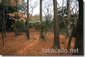 紅葉の季節も終盤の龍安寺