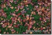 落ち葉と苔のコントラスト