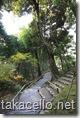 高台寺境内の竹藪