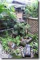 わらじやの中庭
