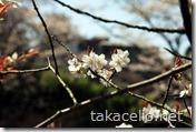 桜の時期の吉野山の風景