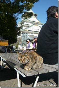 小春日和に大阪城バックにひなたぼこにゃん