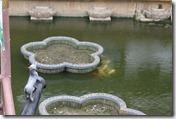 湖心亭からの眺め