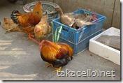 鶏とアヒルのドナドナ